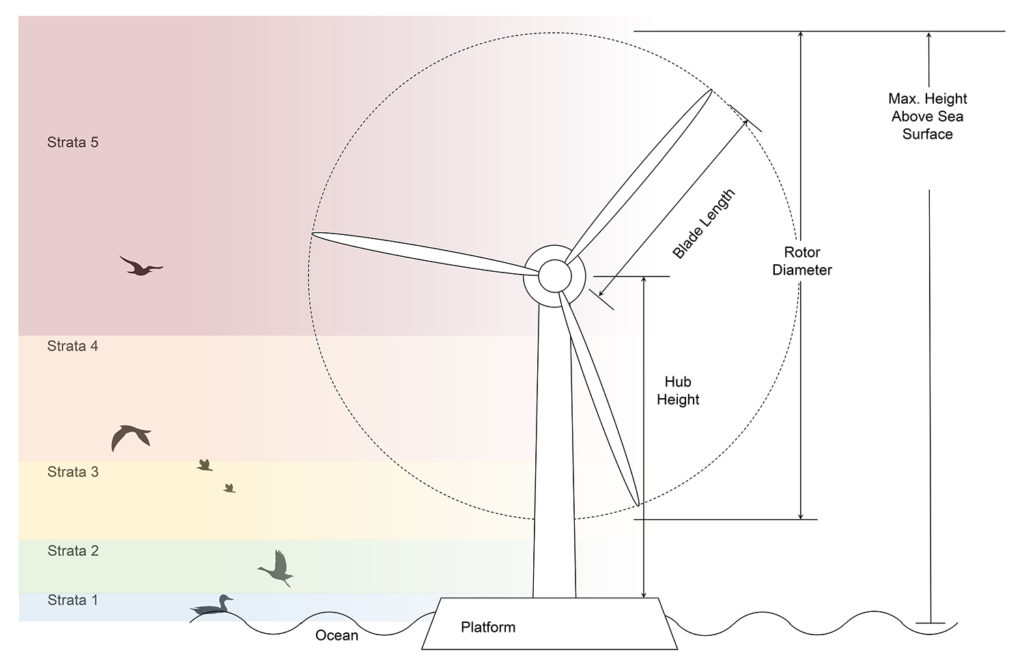 Image shows a turbine with delimiters for hub height, blade length, rotor diameter, and max distance above the sea, intersecting with 5 different strata of bird flight.