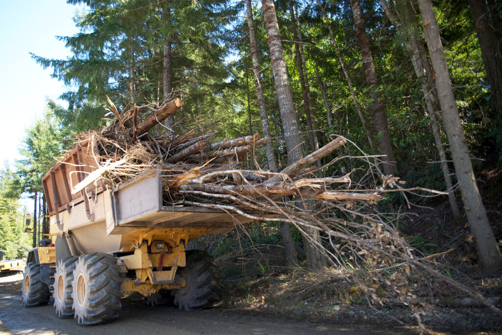 A pile of tree limbs in a truck
