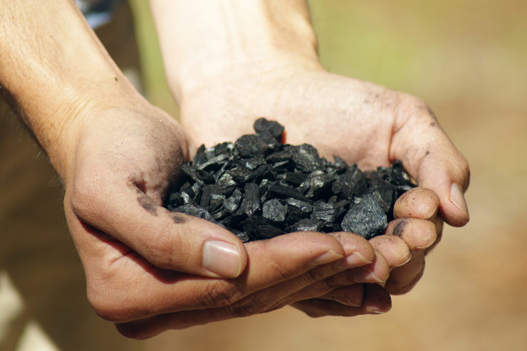 Two hands hold a small pile of biochar