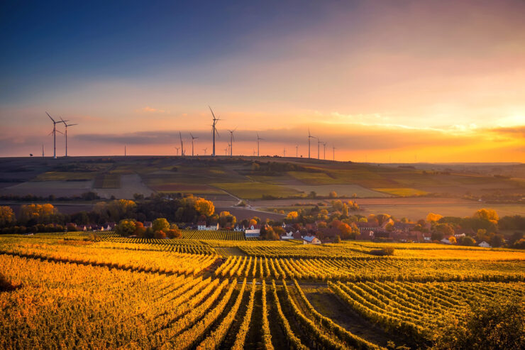 An agricultural field at sunset with wind turbines in the distance